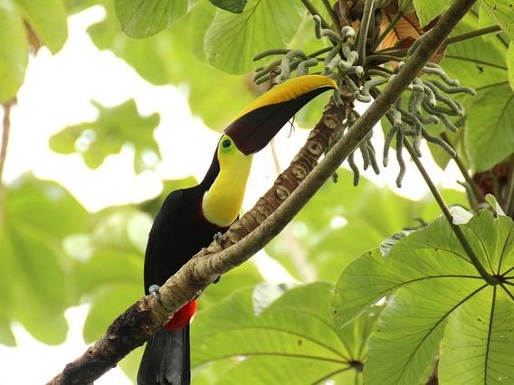 Spenden für den Regenwald