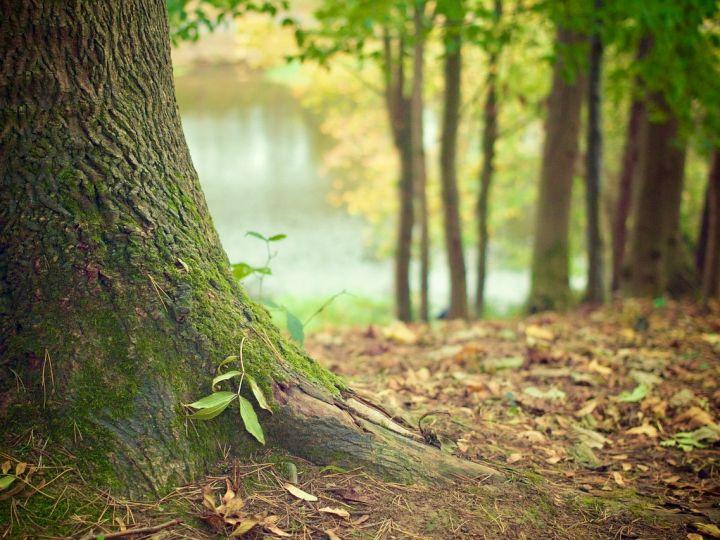 Wald-1.jpg